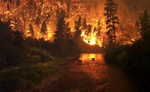 deer in a forest fire